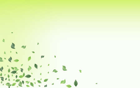 Olive Leaves Nature Vector Green Background Border. Tree Foliage Backdrop. Forest Leaf Ecology Poster. Greenery Blur Branch. Ilustracja