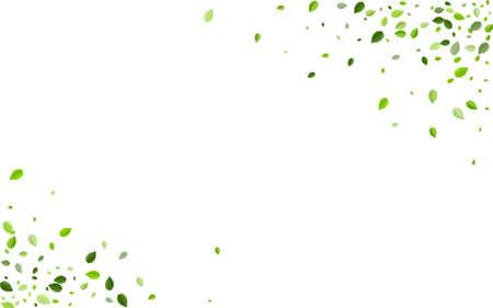 Swamp Greens Falling Vector Design. Forest Leaf Banner. Forest Foliage Spring Background. Leaves Tree Wallpaper.