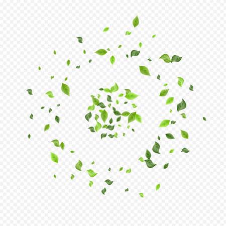 Lime Greenery Herbal Vector Transparent Background Design. Realistic Foliage Border. Olive Leaf Tea Concept. Leaves Nature Branch. Stock fotó