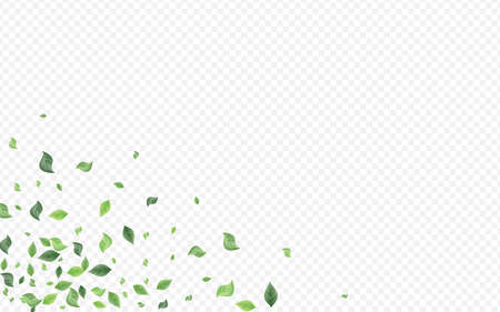 Forest Foliage Tree Vector Transparent Background Template. Spring Leaf Plant. Mint Leaves Ecology Border. Greenery Falling Wallpaper.