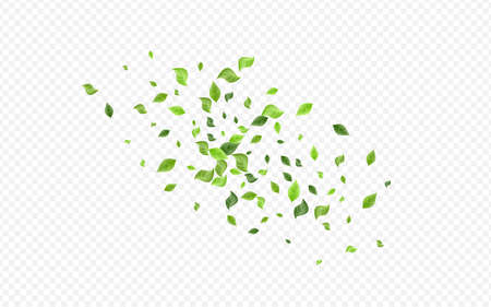 Green Greenery Forest Vector Transparent Background Branch. Flying Leaves Backdrop. Forest Foliage Fresh Plant. Leaf Organic Concept.