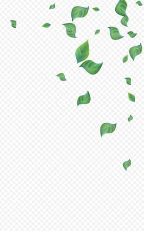 Forest Greenery Ecology Vector Transparent Background Backdrop. Spring Leaf Poster. Mint Leaves Motion Banner. Foliage Falling Branch.