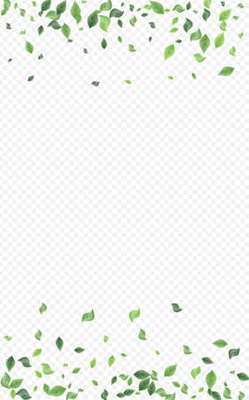 Green Leaf Fly Vector Transparent Background Poster. Organic Greenery Border. Lime Leaves Herbal Pattern. Foliage Ecology Template. Zdjęcie Seryjne