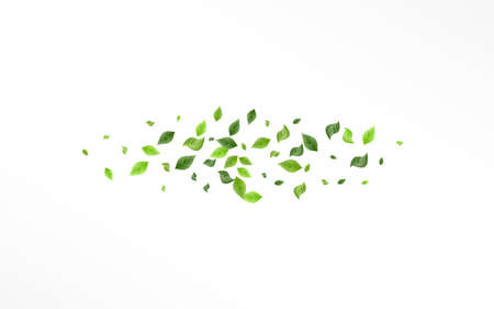 Green Leaf Blur Vector White Background Backdrop. Organic Foliage Brochure. Lime Greenery Fresh Pattern. Leaves Spring Branch.