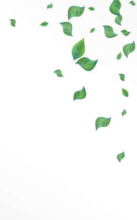 Green Greenery Spring Vector White Background Wallpaper. Ecology Leaf Pattern. Lime Leaves Fly Banner. Foliage Wind Backdrop.