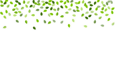 Olive Leaf Blur Vector Branch. Organic Foliage Wallpaper. Forest Leaves Wind Pattern. Greens Forest Border.