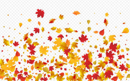 Red Plant Vector Transparent Background. Celebrate Leaf Template. Ocher Down Foliage Card. Canadian Texture. Illustration