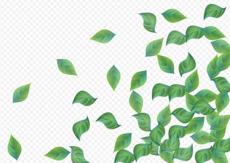 Swamp Leaf Swirl Vector Transparent Background Backdrop. Falling Leaves Concept. Grassy Greenery Motion Template. Foliage Tea Illustration. Banque d'images
