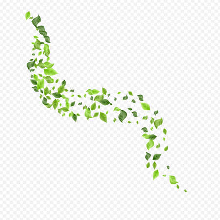Mint Leaf Spring Vector Transparent Background Design. Tea Greenery Illustration. Swamp Foliage Ecology Brochure. Leaves Herbal Poster.