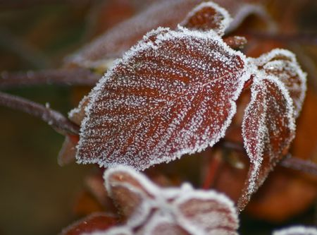 red leave with frost, close-up