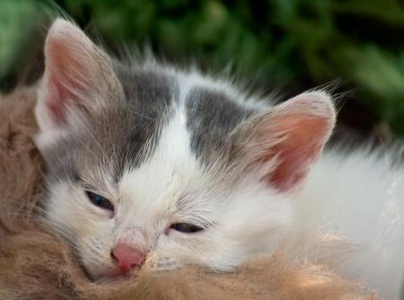Sleepy kitty Stock Photo
