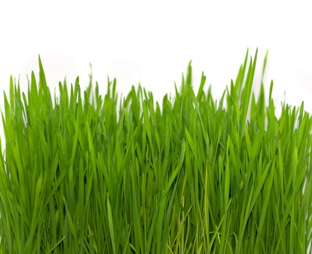 green grass on white (wheat)  Stock Photo - 9411611