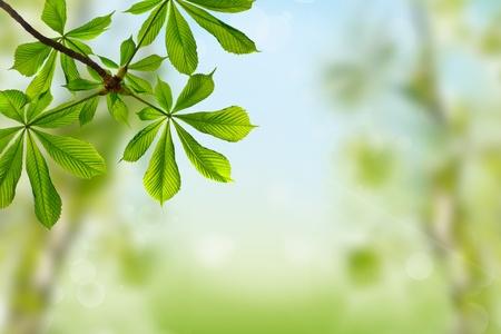 chestnut green leaves on spring background