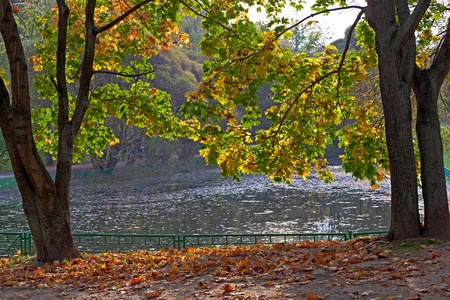 autumn trees in the park at the pond  Stock Photo