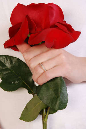 Red rose closeup - wedding theme