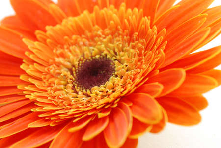 Closeup of a beautiful orange flower photo