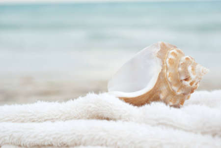 Sea shell with a soft background and plenty of copyspace