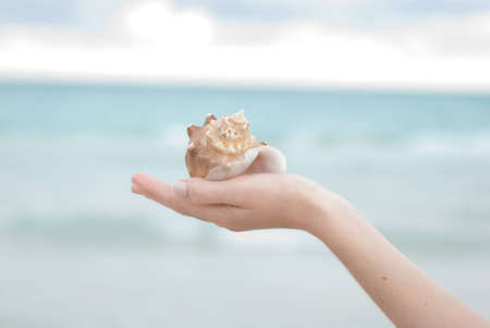 Hand holding a sea shell with a soft background and plenty of copyspace