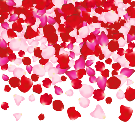flower petals: Red and pink rose petals isolated on white. Valentine background. Beauty fashion woman concept.