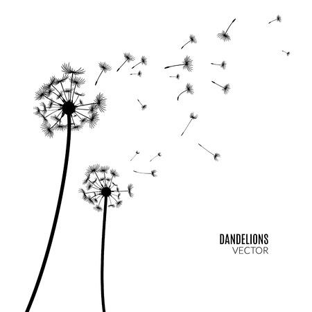 Vector Dandelion silhouette. Flying dandelion buds black on white