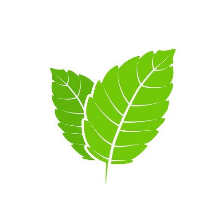 Fresh mint leaf. Vector menthol healthy aroma. Herbal nature plant. Spearmint green leafs flat. Vectores