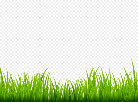 Green grass meadow border vector pattern. Spring or summer plant field lawn. Grass background. Çizim