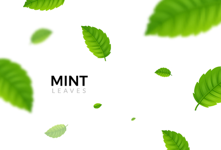 Green eco mint leaf background. Ecology mint pattern design plant illustration.