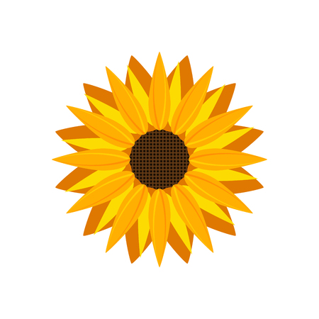 Sunflower icon vector isolated. Yellow sunflower blossom nature flower illustration for summer.