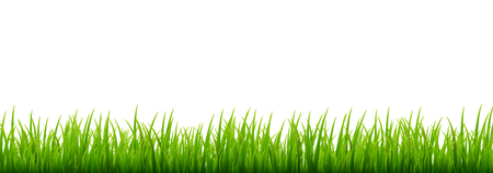 Green grass meadow border vector pattern. Spring or summer plant field lawn. Grass background. 向量圖像