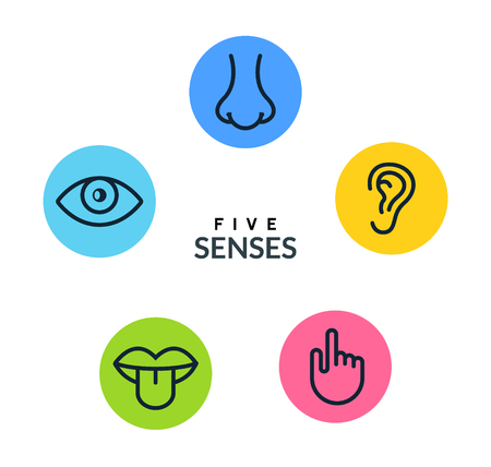 Five human senses vision eye, smell nose, hearing ear, touch hand, taste mouth and tongue. Line vector icons set