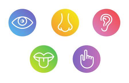 Ojo de visión de cinco sentidos humanos, olfato de nariz, oído de oído, mano táctil, boca de sabor y lengua. Conjunto de iconos de vector de línea