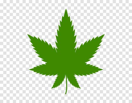 Cannabis leaf on white background. Illegal drug natural plant to smoke. Marijuana herbal narcotic cannabis
