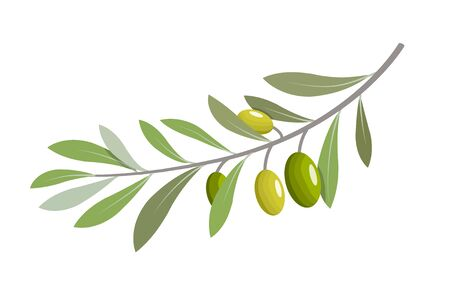 Olive branch tree isolated leaf. Olive food green branch plant illustration