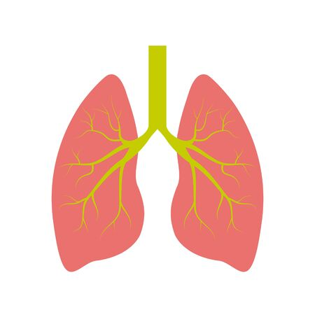 Lung human icon, respiratory system healthy lungs anatomy flat medical organ icon