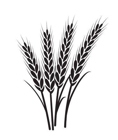 Wheat vector plant grain icon illustration. Wheat field harvest design agriculture