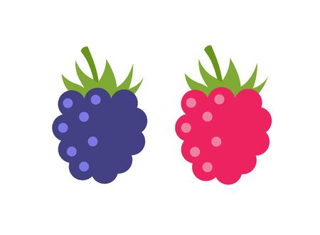Raspberry vector icon illustration. Flat berry sweet healthy organic fruit raspberry blackberry