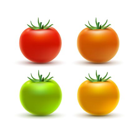 Tomato colorful isolated on white. Tomato organic food photo-realistic red orange yellow and green vector illustration of healthy vegetable.
