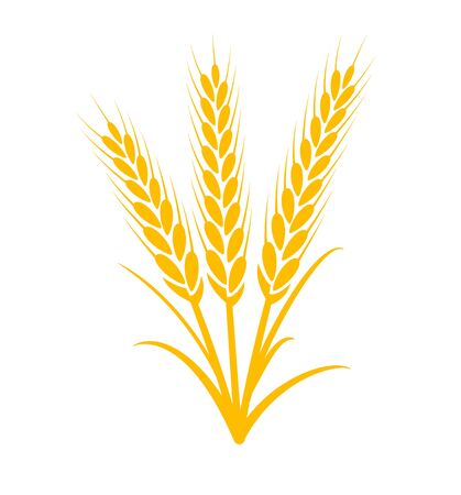 Wheat vector plant grain icon illustration. Wheat field harvest design agriculture