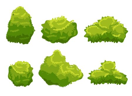 Vector garden bush isolated shrub hedge. Green bush cartoon grass shrubbery plant.