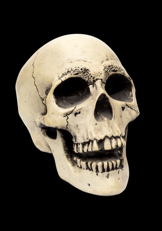 Modelo Realista De Un Cráneo Humano Con Dientes, 3/4 Vista, Aislados ...
