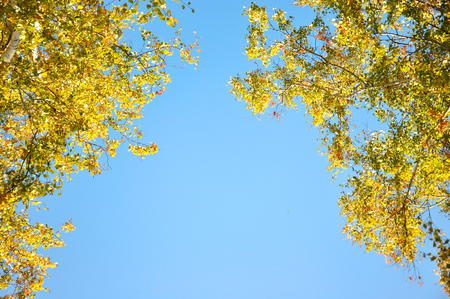 maleza: Autumn trees. Branches with green and yellow leaves illuminated by the sun. Against the background of the blue sky Foto de archivo