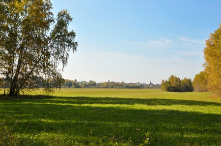 treeline: Landscape early autumn. Glade with yellow grass and leaves on the background of autumn birch grove in the distance field and village. West Siberia Stock Photo