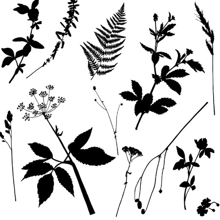 Seamless floral pattern with wild plants and herbs. Vector silhouettes of flowers and grass in black and white colours. Endless texture for fashion design, textile, backgrounds and prints.