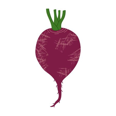 Fresh beet, beetroot icon. Harvest vegetables for vegan kitchen in hand drawn flat style. Organic healthy food for menu and market design. Colorful, texture and fun farm products. 일러스트
