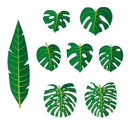 set of green tropical leaves. Monstera, banana, palm leaf isolated on white background. Hand drawn foliage. Pack of flat floral elements.