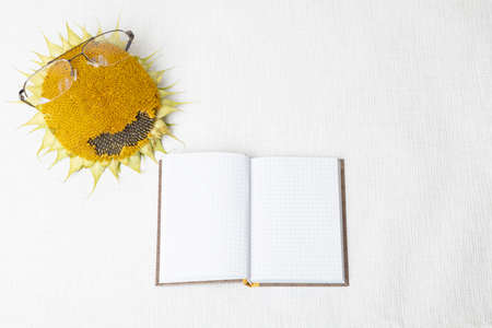 Sunflower with reading glasses and notepad. concept, learning, school, hello autumn, on a white background, there is a place for text. High quality photo