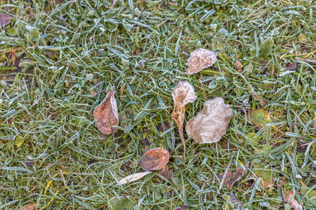 The green grass is covered with frost. Freezing. Autumn morning. High quality photo