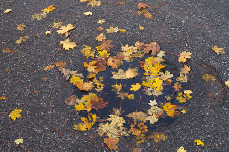 Fallen, colorful leaves on wet asphalt autumn background. High quality photo
