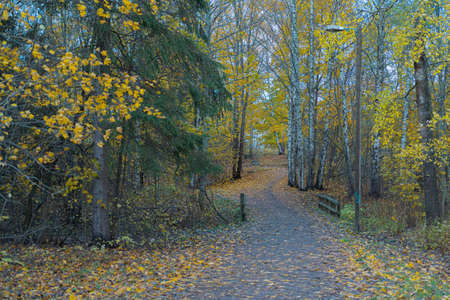 Colorful view of the autumn forest. High quality photo Imagens