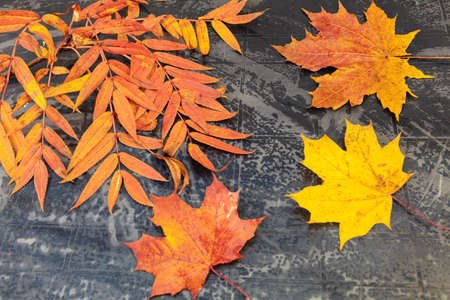 autumn, bright leaves on a black table. Concept of autumn, relaxation. High quality photo
